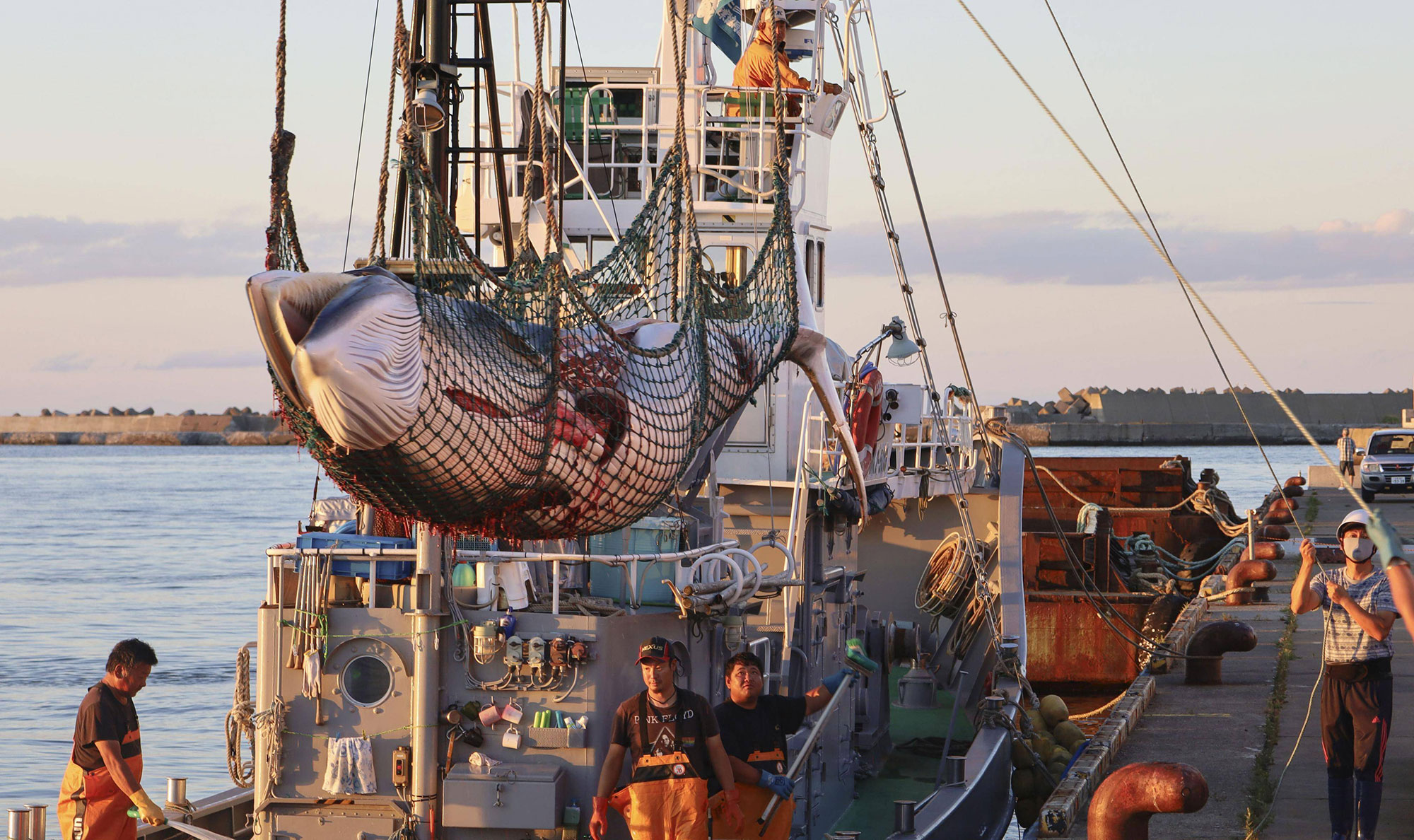 The Perception And Reality Of Japanese Whale Hunting
